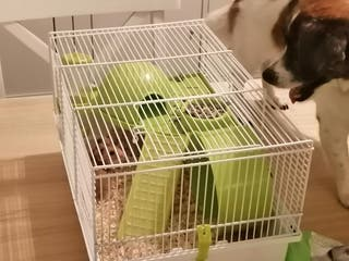 Jaula nueva para hamster con todo lo necesario