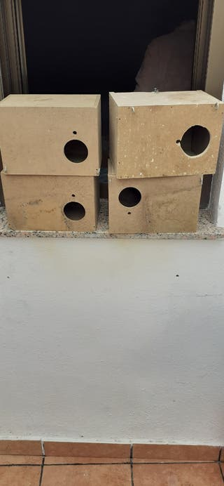 nidos para ninfas o agaponis