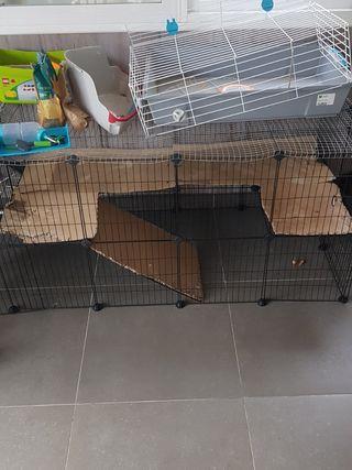 conejo, cobaya, jaula, roedores